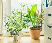 3 houseplants that are good for your health
