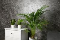 Houseplant of the month: Areca palm