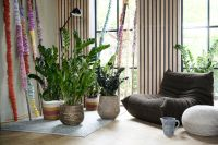 Houseplant of the month January: Zamioculcas