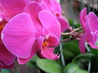 Bring orchids back into growth