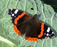 Wander among the butterflies this week
