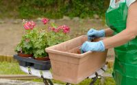 Plant pots for pollinators