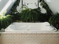 Top 7 Houseplants for in the bathroom