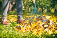 What to do in the garden in November?
